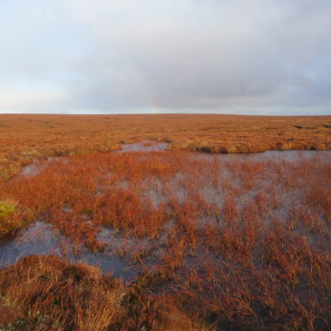 Peatland Scientist (Maternity Cover)